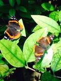 Papillon reflété photographie stock