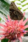 Papillon remplissant sur le nectar Photo stock