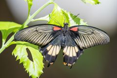Papillon rentrant un certain soleil Photographie stock libre de droits