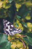 Papillon, ressort, été, macro, photos stock