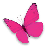 Papillon rose Images stock