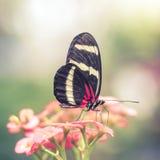 Papillon rose dans le jardin d'agrément rêveur Photo libre de droits