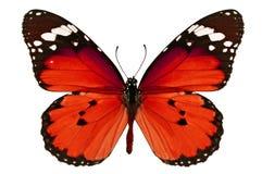 papillon rouge Photos stock