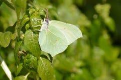 Papillon se mélangeant dans le décor Photos libres de droits