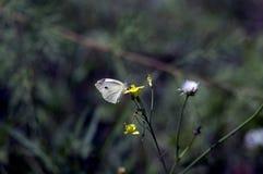 Papillon se reposant sur la fleur Photo stock