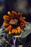 Papillon se reposant sur la fleur Photos libres de droits
