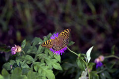 Papillon se reposant sur la fleur Photographie stock
