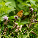 Papillon se reposant sur la fleur Photographie stock libre de droits