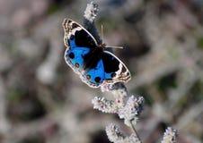 Papillon se reposant sur le congé d'arbre Image libre de droits