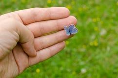 Papillon se reposant sur le doigt Image libre de droits