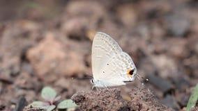 Papillon se reposant sur le sol banque de vidéos
