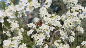 Papillon se reposant sur un arbre embranché au printemps clips vidéos