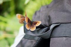 Papillon se reposant sur un sac à dos Image stock
