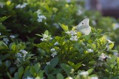 Papillon se reposant sur une usine dans un jardin image stock