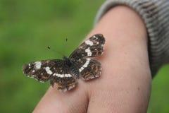 Papillon se tenant en main Photo libre de droits