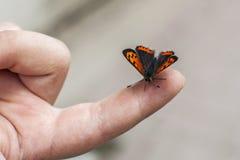"""Papillon se tenant sur un doigt du """"s de chldrenÎ Images libres de droits"""