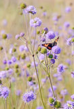 Papillon sur des fleurs Image libre de droits