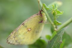 Papillon sur l'herbe un jour d'été dans le macro photographie stock