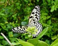 Papillon sur la feuille Photos stock