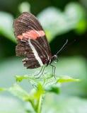 Papillon sur la feuille Image stock