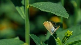 Papillon sur la feuille Image libre de droits