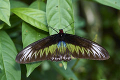 Papillon sur la feuille Photos stock