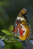 Papillon sur la feuille Photo libre de droits
