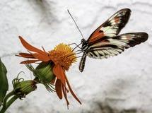 Papillon sur la fleur Photo stock