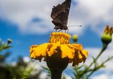 Papillon sur la fleur photos stock