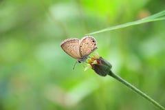 Papillon sur la fleur Papillon, fond vert photo libre de droits