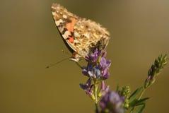 Papillon sur la fleur pourpre Image libre de droits