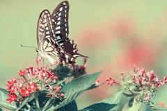 Papillon sur la fleur rouge sur le fond vert photo stock