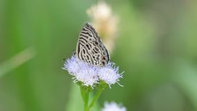 Papillon sur la fleur banque de vidéos