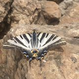 Papillon sur la roche Photo stock