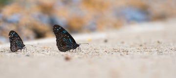 Papillon sur la route Photographie stock libre de droits