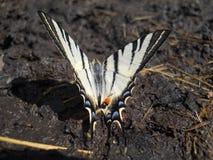 Papillon sur la terre Photographie stock