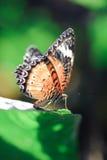 Papillon sur le congé photographie stock