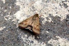 Papillon sur le fond gris Images libres de droits