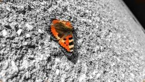 Papillon sur le mur Image stock