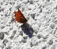 Papillon sur le mur en pierre Photographie stock