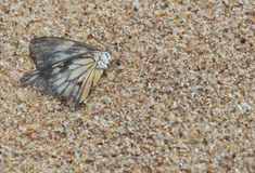 Papillon sur le sable Images libres de droits