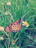 Papillon sur le style de vintage de fleur Photographie stock
