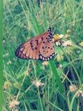 Papillon sur le style de vintage de fleur Photo libre de droits