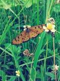 Papillon sur le style de vintage de fleur Image libre de droits