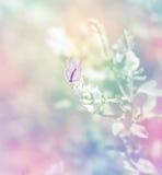 Papillon sur le wildflower photographie stock libre de droits