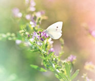Papillon sur le wildflower Photographie stock