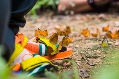 Papillon sur les chaussures colorées Images stock