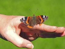 Papillon sur les inscriptions humaines d'amiral rouge de main sur des ailes Photographie stock libre de droits