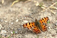 Papillon sur terre Photo stock
