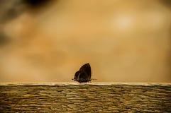 Papillon sur un bois image libre de droits
